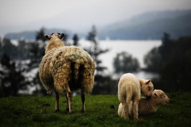 Lake District (15)