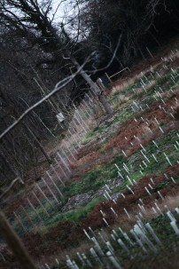 Bucklebury Common 15